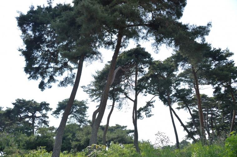 추양리 전통마을숲 사진.jpg