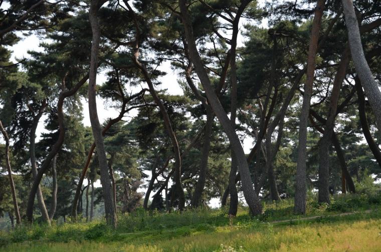 추양리 전통마을숲 사진 (2).jpg