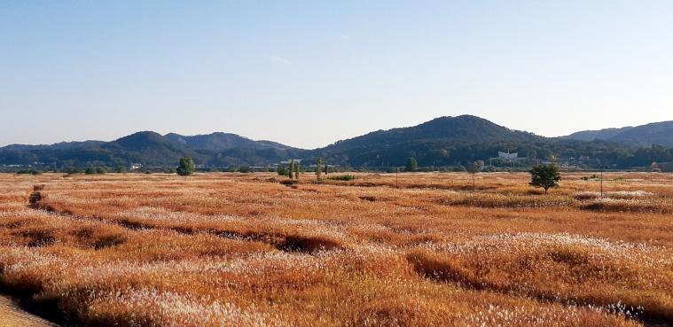 부여군 군수지구 물억새 생태공원 장면 (1).jpg