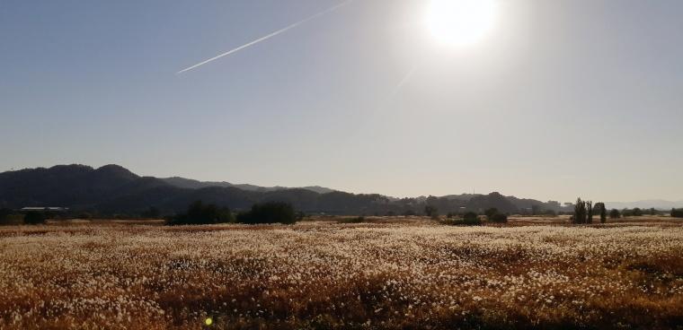 부여군 군수지구 물억새 생태공원 장면 (5).jpg